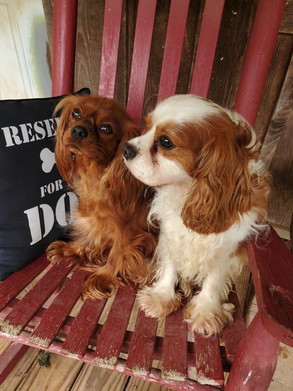 Madam Ruby & Sir Edwin